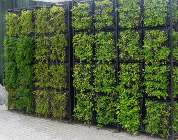 Muro com verde for Plantas muro verde